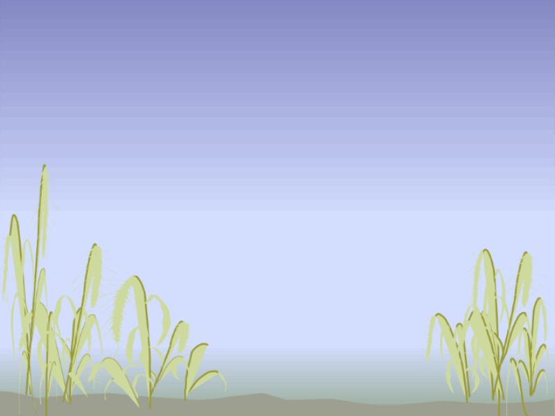 قالب تصميم شاطيء البحر