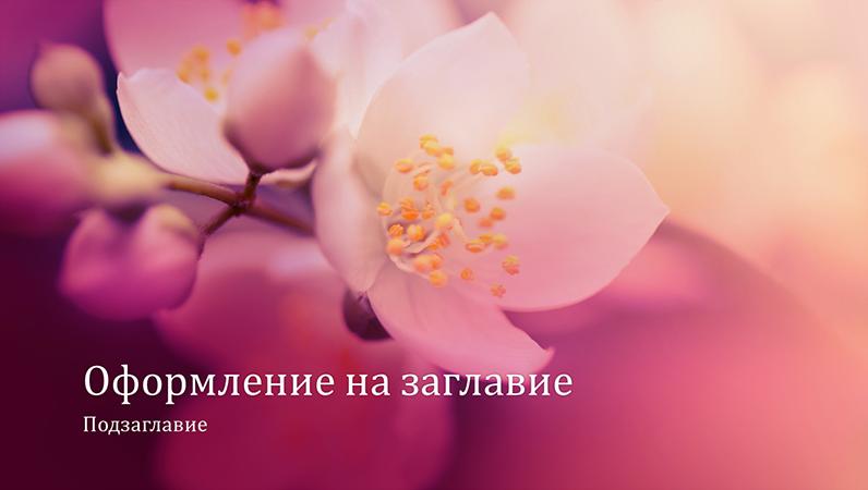 Природна презентация с вишнев цвят (широк екран)