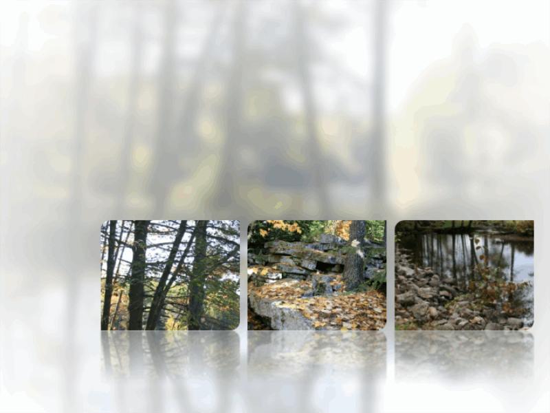 Zrcadlící se obrázky na rozostřeném pozadí