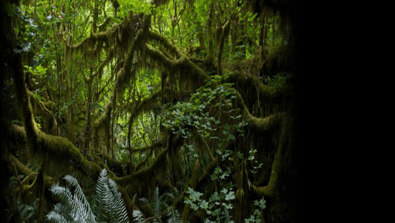 Animeret rullende tekst over en regnskov som baggrund