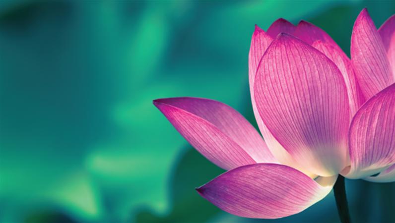 Facebook-Banner mit Blumenmotiven