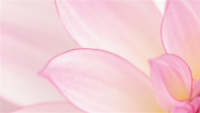 LinkedIn-Banner mit Blumenmotiven