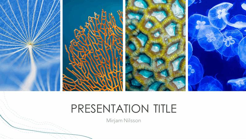 Ocean presentation