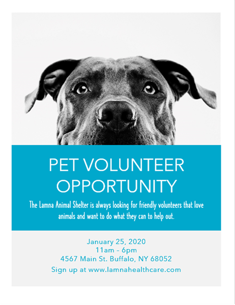 Pet volunteer opportunity flyer