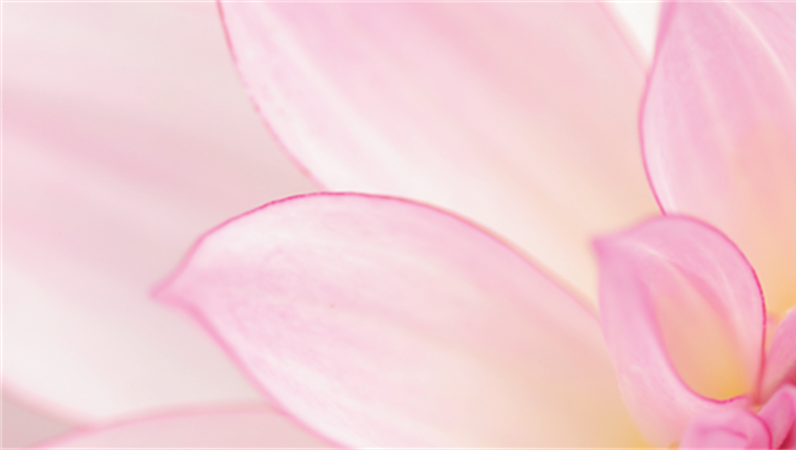 Floral LinkedIn banners