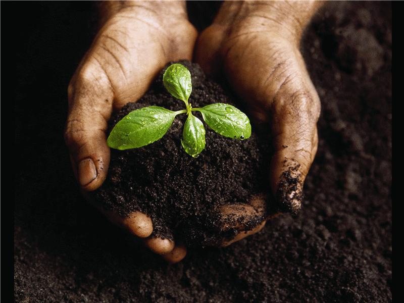 Diapositiva con una imagen de planta joven