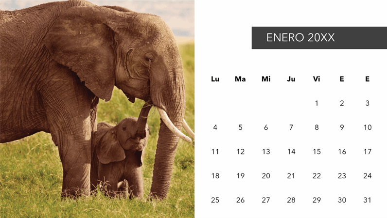 Calendario fotográfico de animales bonitos