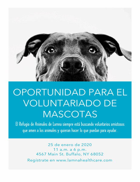 Folleto de oportunidad de voluntariado con mascotas