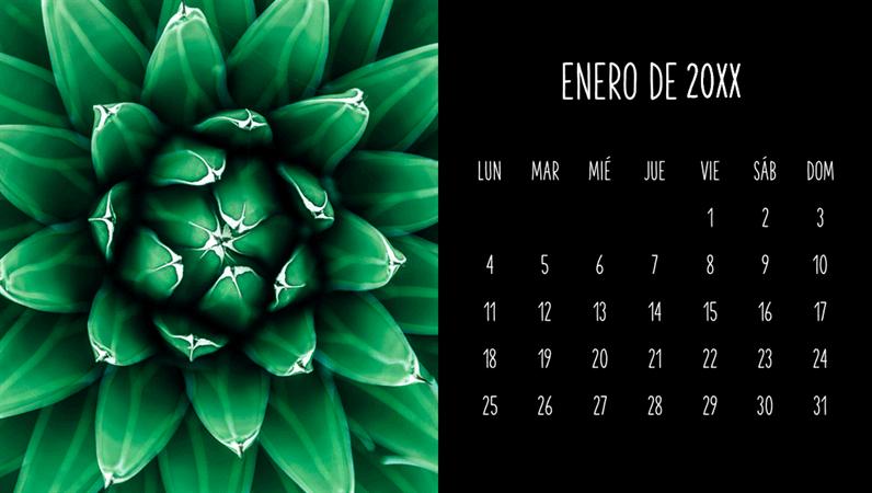 Calendario mensual de suculentas