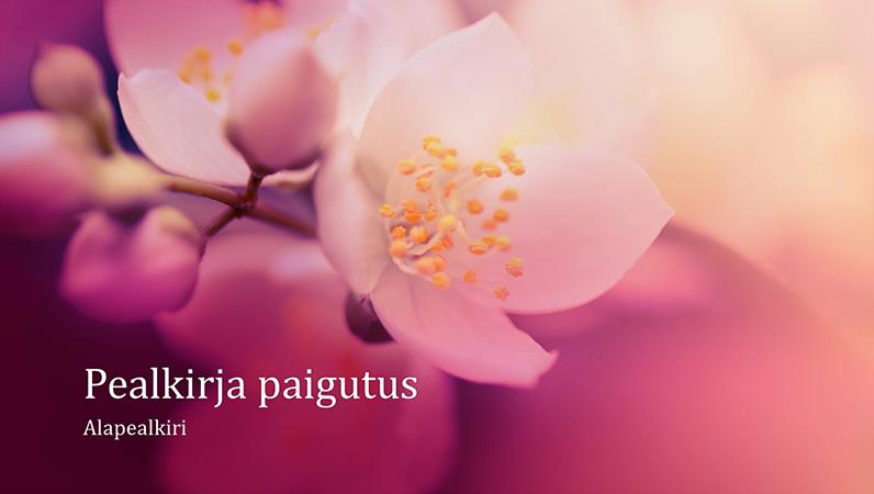 Kirsiõitekujundusega loodusteemaline esitlus (laiekraan)