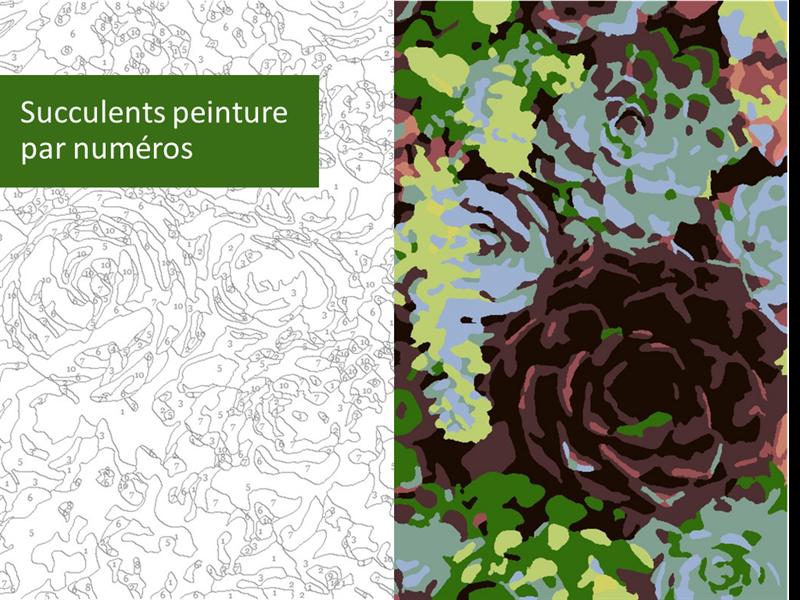 Peinture de succulents par numéros