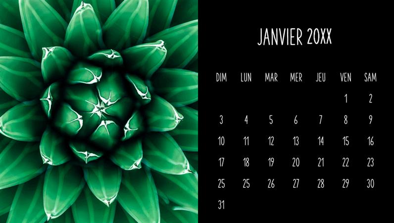 Calendrier mensuel de succulentes