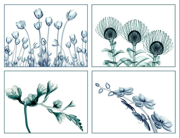 Cartes de vœux de vues à fleurs (10cartes, 2 par page)