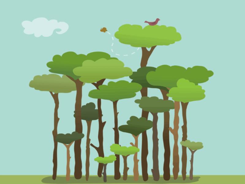 Thème écologie - Forêt