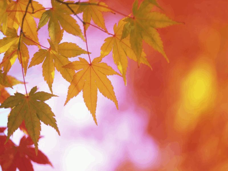 Thème automne - Feuilles multicouleurs