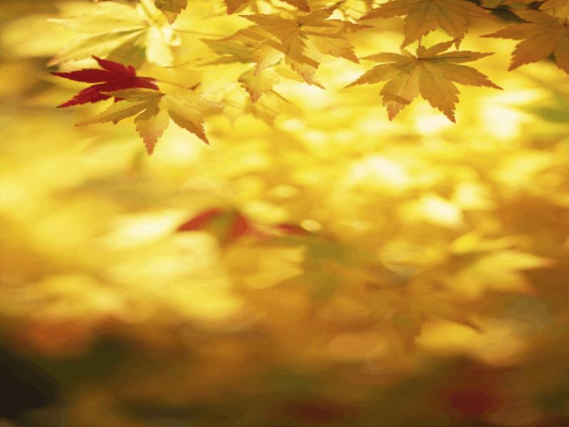 Thème automne - Feuilles or
