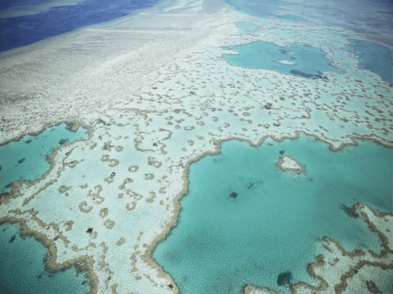 Thème mer - Barrière de corail