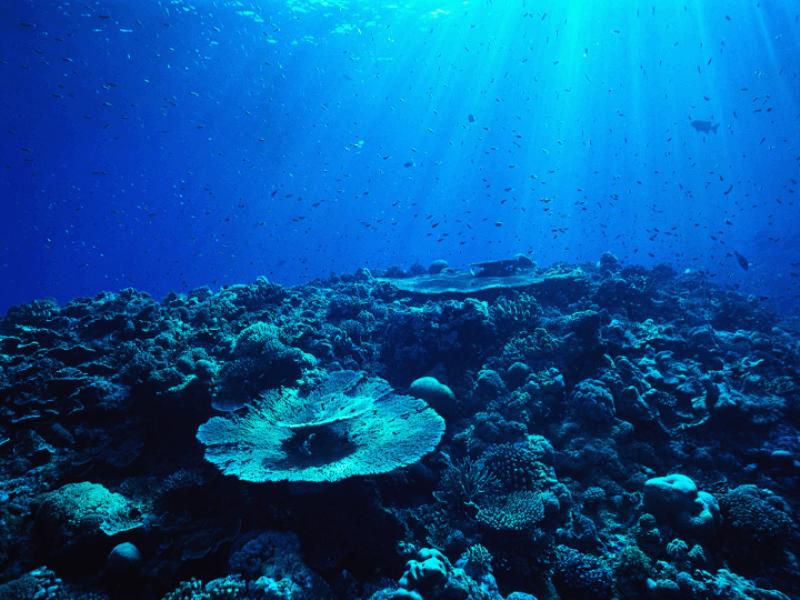 Thème mer - Fonds marins