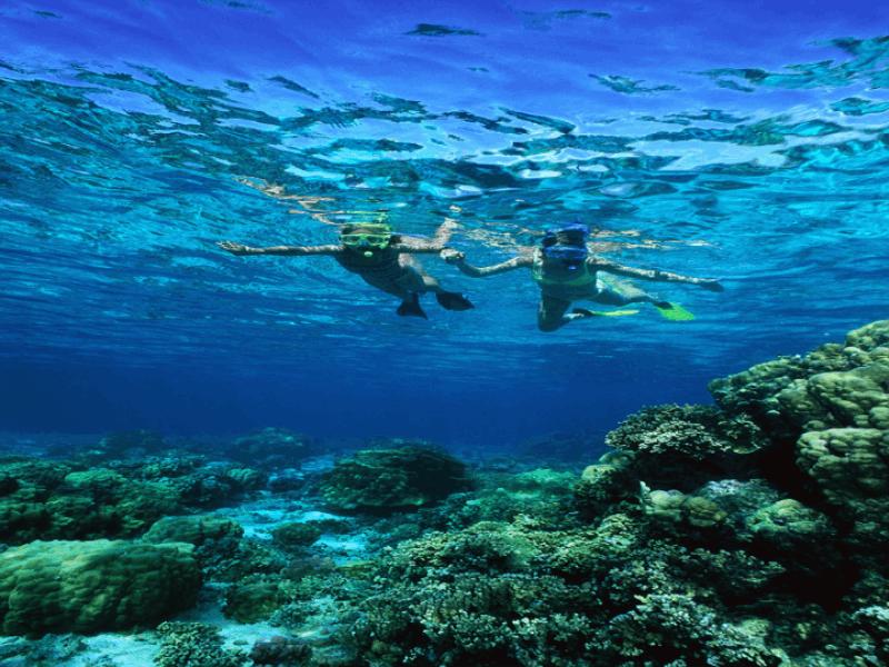 Thème mer - Plongée