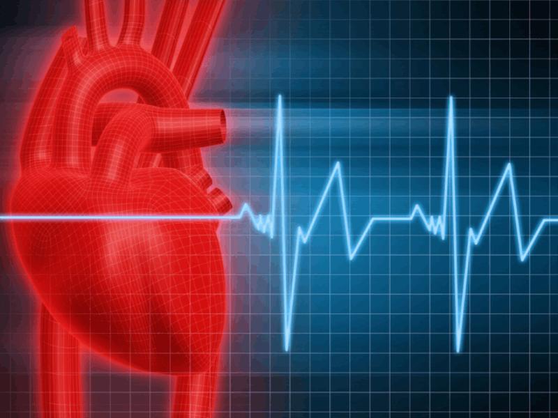 Thème santé - Anatomie coeur