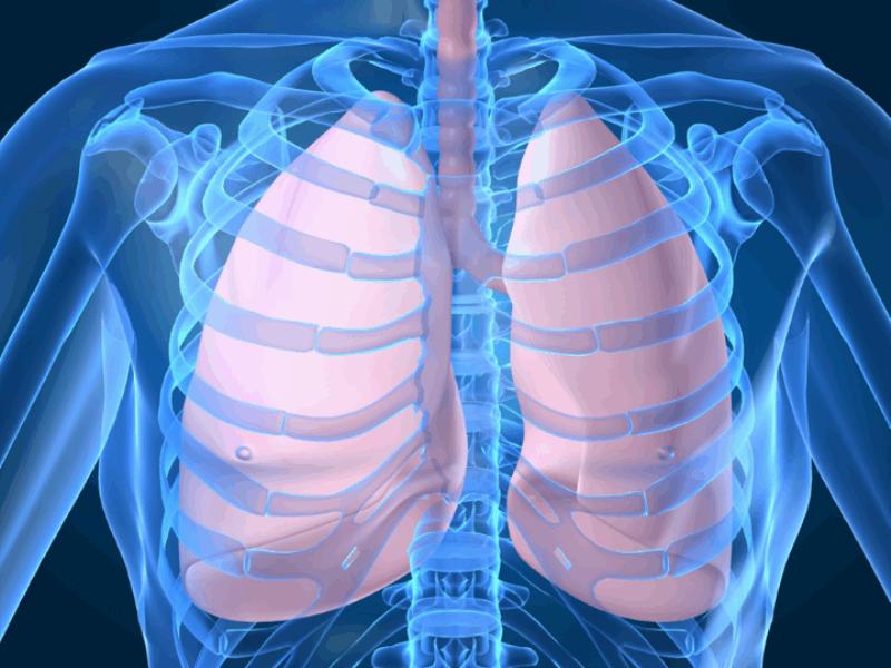 Thème santé - Anatomie poumons