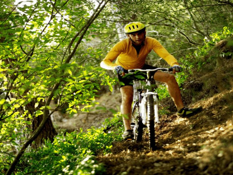 Thème vélo - VTT en forêt
