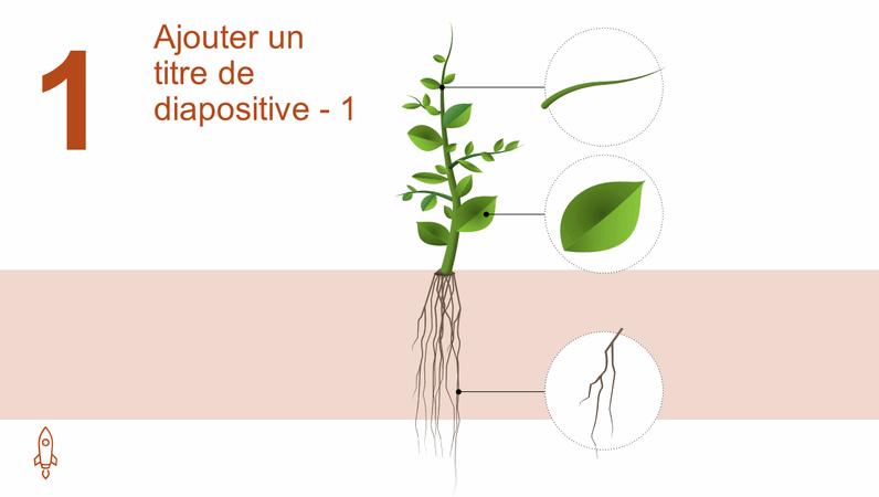 Graphique animé Développement d'un arbre
