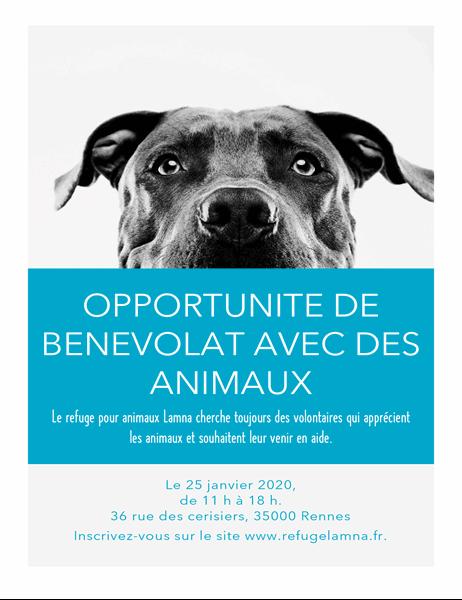 Prospectus d'opportunité de bénévolat avec des animaux de compagnie