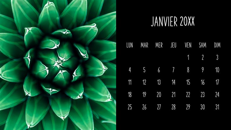 Calendrier mensuel Succulentes