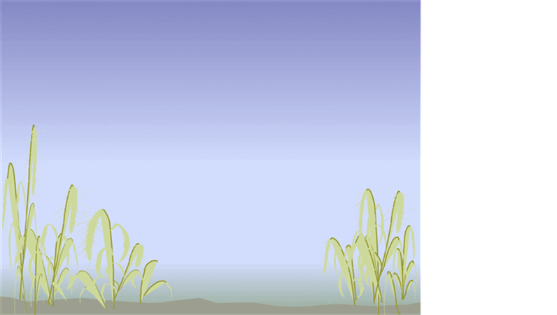 תבנית עיצוב - חוף ים