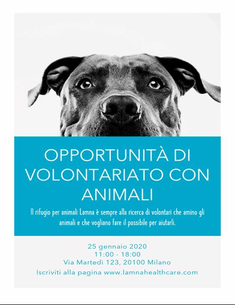 Volantino per opportunità di volontariato con gli animali