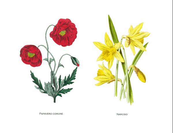 Set di biglietti a tema orto botanico