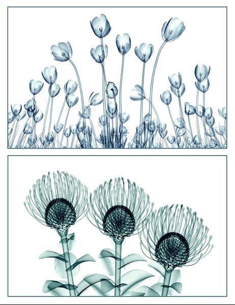 花のビジョンのグリーティング カード (10 枚、1 ページに 1 枚)