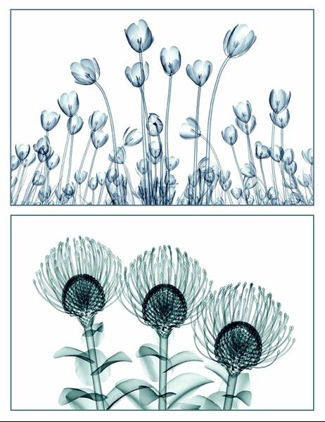 花の絵のグリーティング カード (10 枚、1 ページに 1 枚)