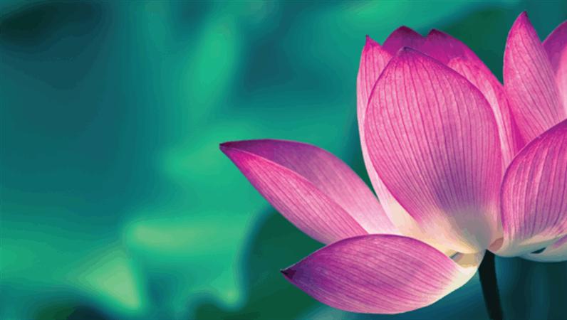 花の Facebook バナー