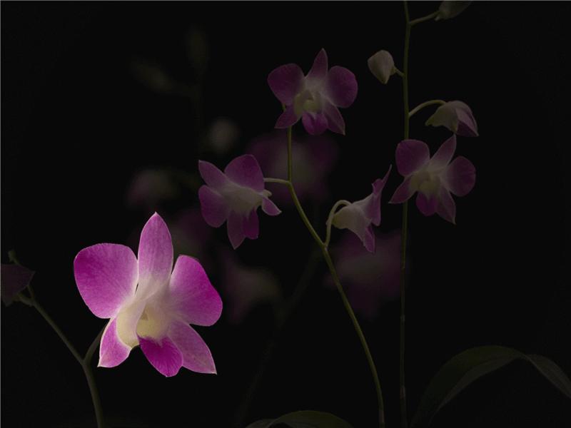 花びらが散るアニメーション