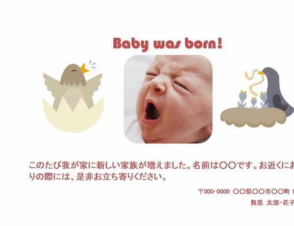 出産報告はがき (ひよこ)