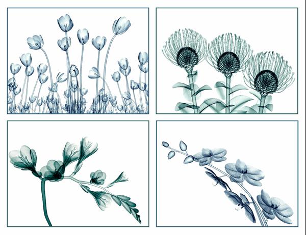 花のビジョンのグリーティング カード (10 枚、1 ページに 2 枚)