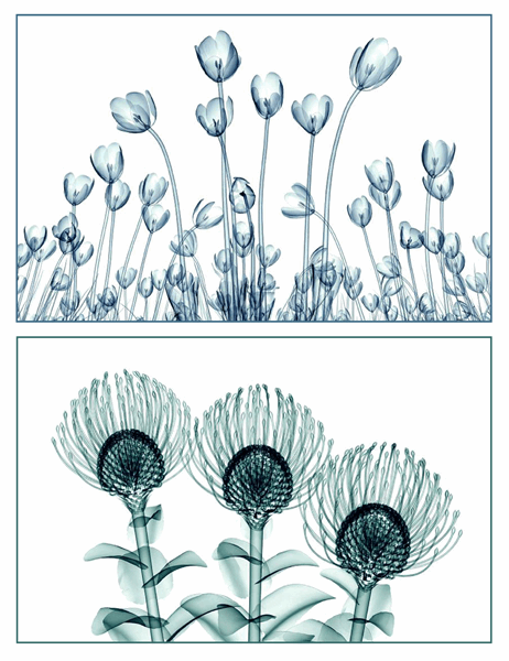 꽃 그림 인사말 카드(5개 카드, 페이지당 1개)