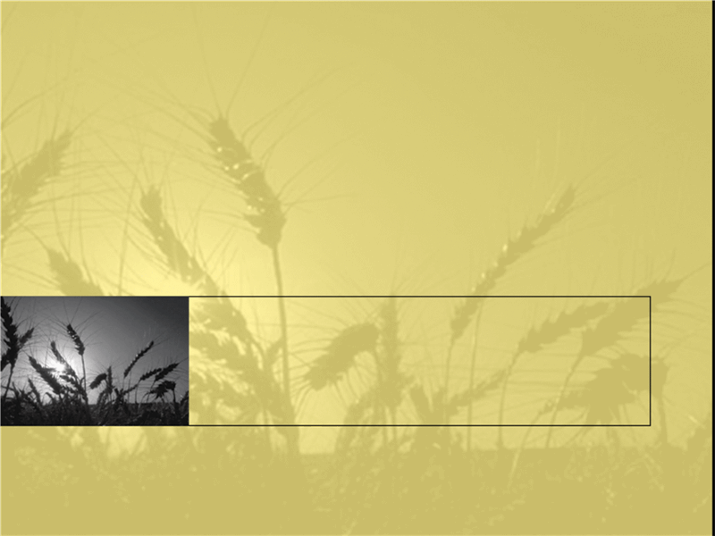 밀밭 디자인 서식 파일