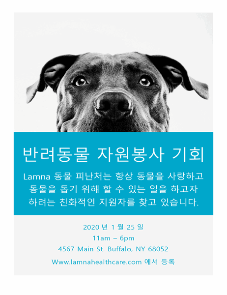 반려동물 자원봉사 기회 전단