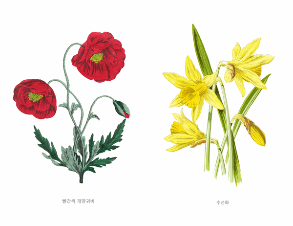 식물 정원 카드 세트