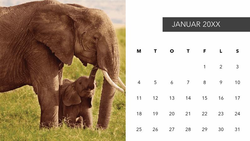 Kalender med søte dyrebilder
