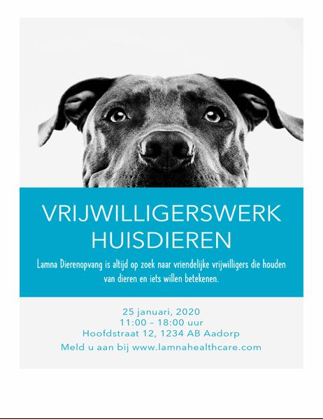Flyer voor vrijwilligerswerk met dieren