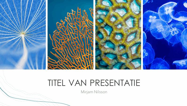 Presentatie Oceaan