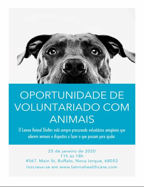Folheto de oportunidade de voluntariado com animais de estimação