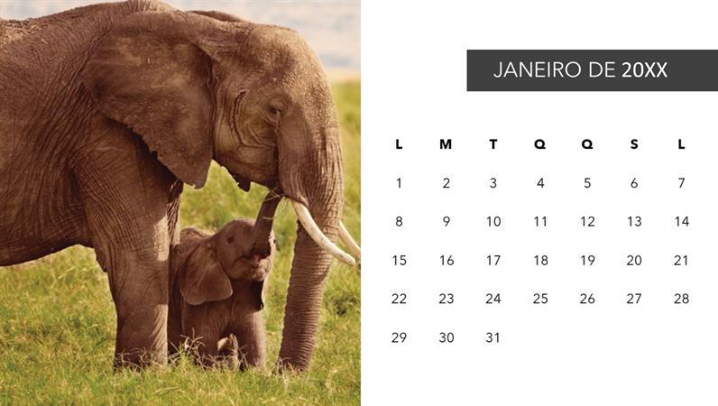 Calendário de fotos de animais fofos