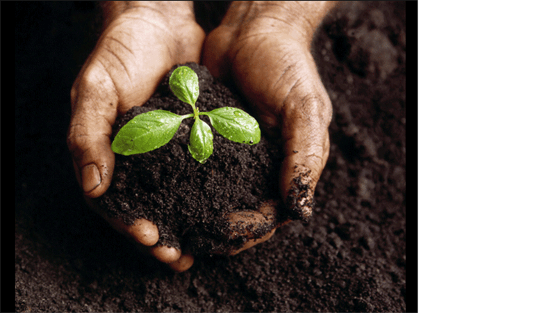 Diapositivo de imagem de planta em crescimento