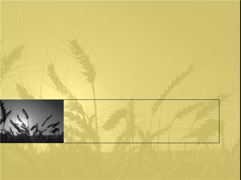 Modelo de apresentação Campo de trigo