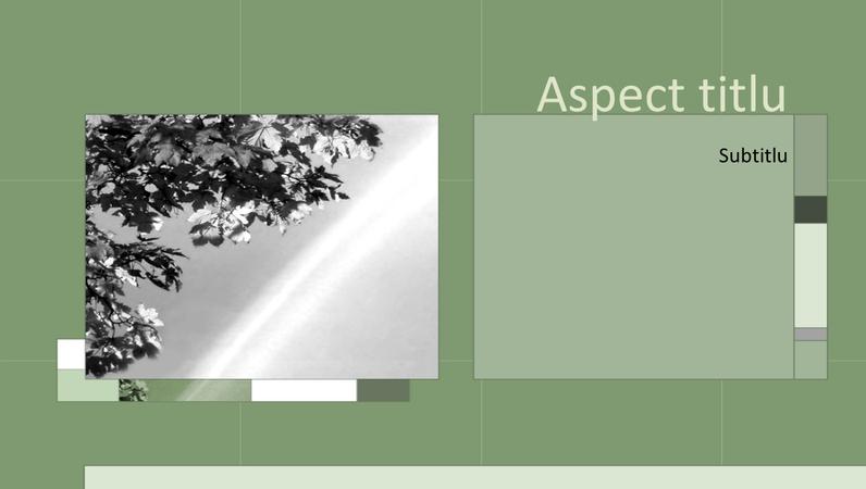 Anotimpuri în diapozitive cu proiectare verde-cenușiu